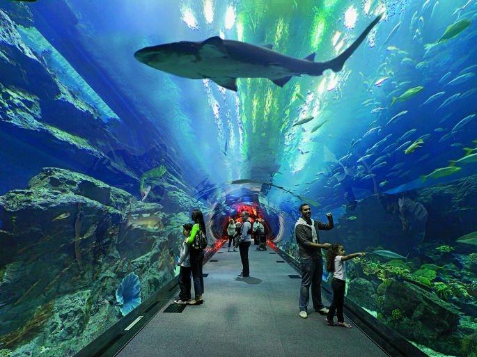 迪拜-Dubai Aquarium (迪拜水族馆)